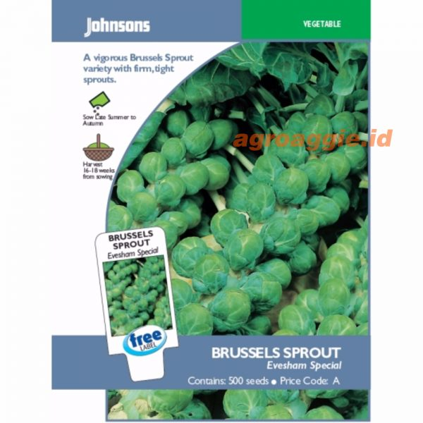Brussels Sprout Evesham Special 2