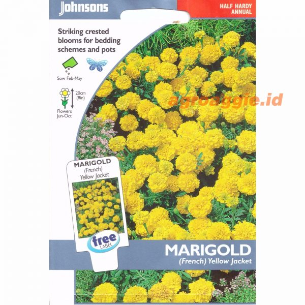 Marigold French Yellow Jacket