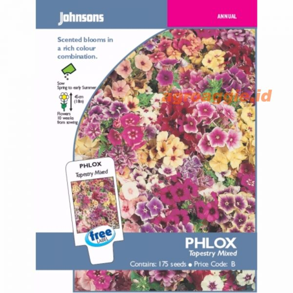 Phlox Tapestry Mixed