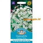 100260 Gypsophila Monarch White