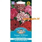 100272 Sweet William Monarch Mixed