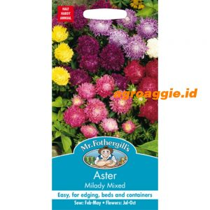 100473 Aster Milady Mixed