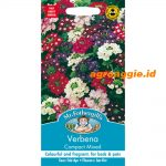 100830 Verbena Compact Mixed