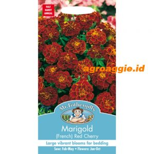 101075 Marigold French Red Cherry