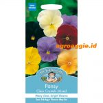 101089 Pansy Clear Crystal Mixed