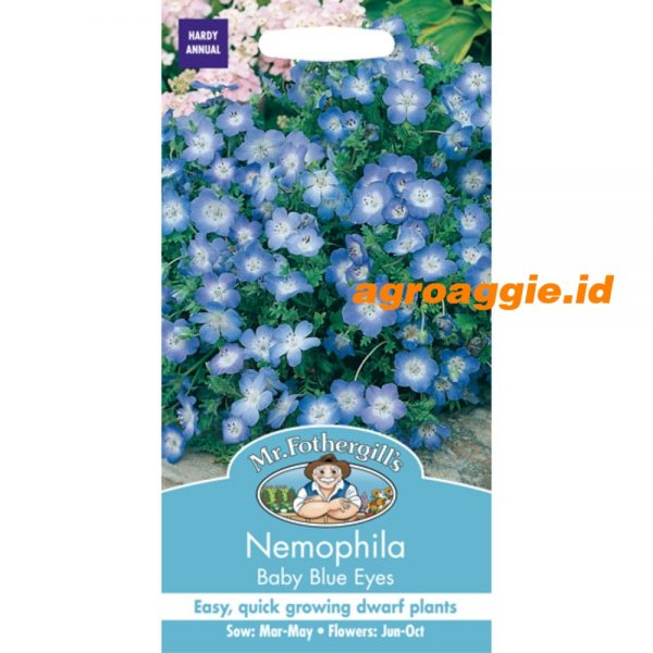 101415 Nemophila Baby Blue Eyes