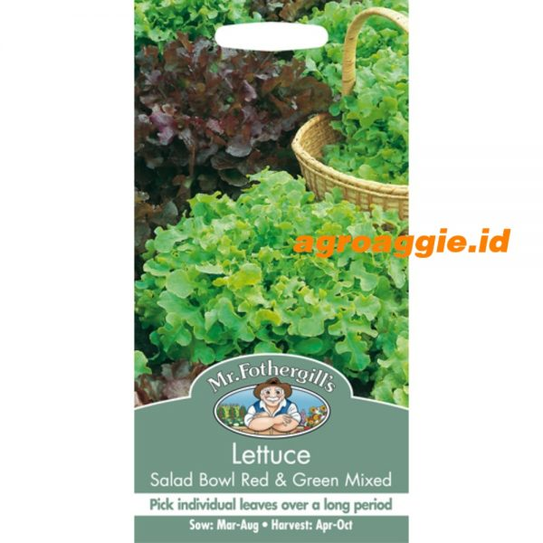 101419 Lettuce Salad Bowl Red Green Mixed
