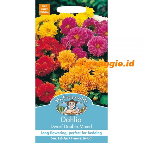 101459 Dahlia Dwarf Double Mixed