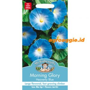 101556 Morning Glory Heavenly Blue