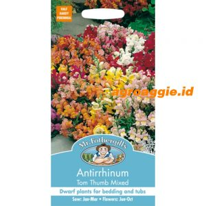102075 Antirrhinum Tom Thumb Mixed