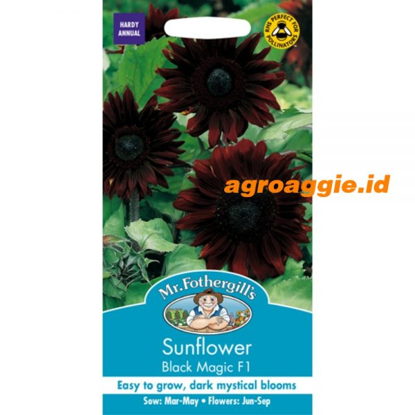 102254 Sunflower Black Magic F1