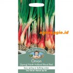 102294 Onion Spring North Holland Blood Red