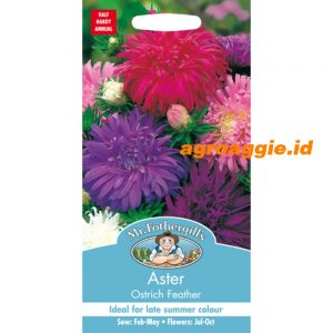 102403 Aster Ostrich Feather