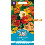 102451 Nasturtium Jewel Mixed