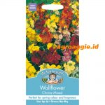 102775 Wallflower Choice Mixed