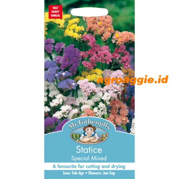 102815 Statice Special Mixed