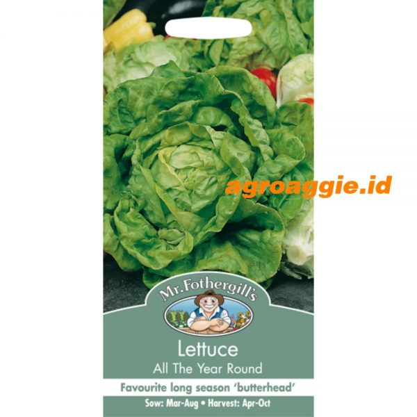 103085 Lettuce All the year round