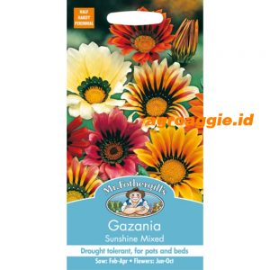 103290 Gazania Sunshine Mixed