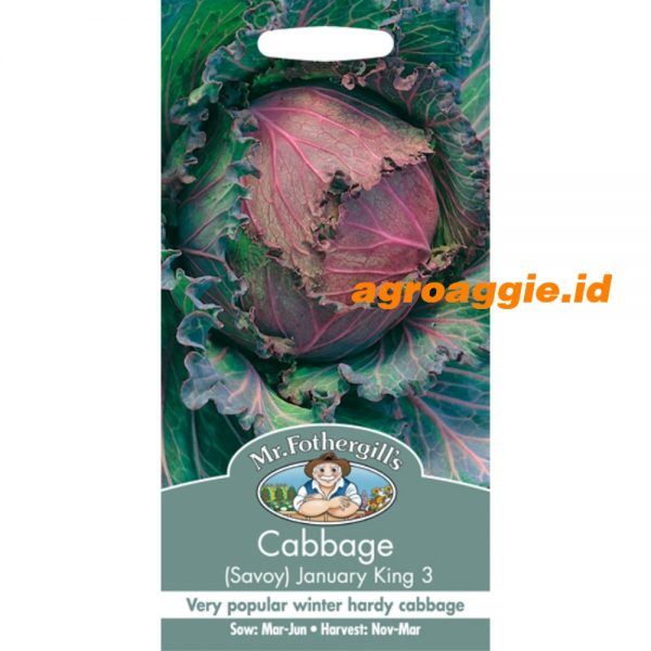 103328 Cabbage Savoy January King 3
