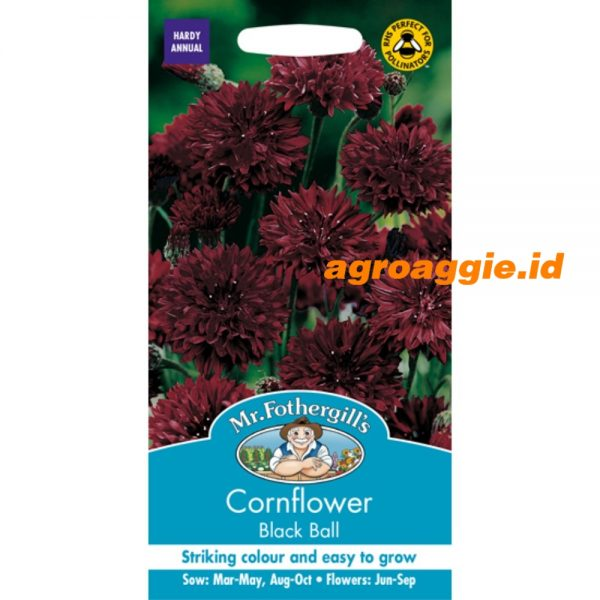 103375 Cornflower Black Ball