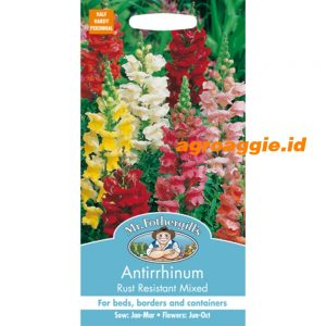 103743 Antirrhinum Rust Resistant Mixed