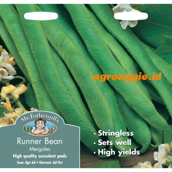 103954 Runner Bean Mergoles Stringless