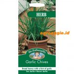 104094 Garlic Chives Herb