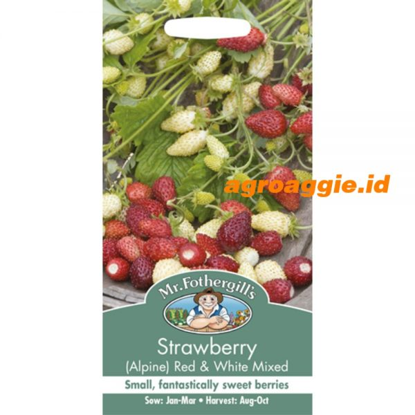 104236 Strawberry Red White Mixed