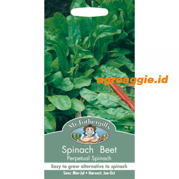 104374 Spinach Beet Perpetual Spinach