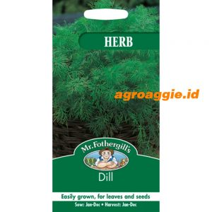 104899 Dill Herb