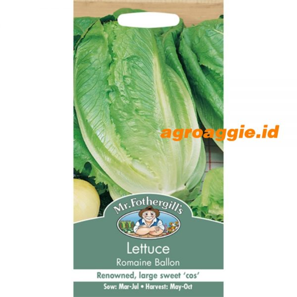 104908 Lettuce Romaine Ballon