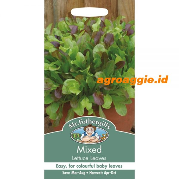 104964 Mixed lettuce Leaves