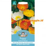 105226 Poppy Iceland Mixed