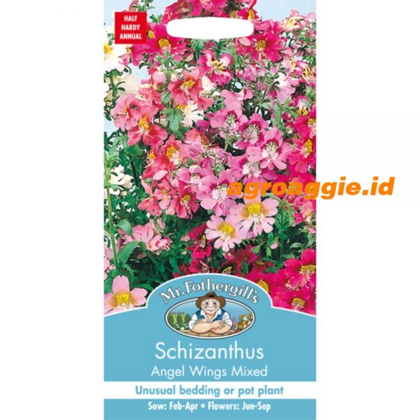 105228 Schizanthus Angels Wings Mixed