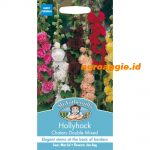 105437 Hollyhock Chaters Double Mixed