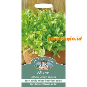 105460 Mixed Lettuce Green Leaves