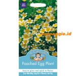 105611 Poached Egg Plant