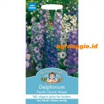 105723 Delphinium Pacific Giants Mixed