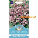 105903 Stock Night Scented