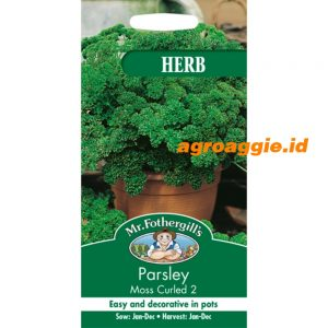 106354 Parsley Moss Curled 2 Herb