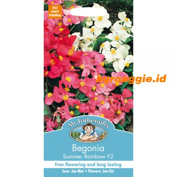 106373 Begonia Summer Rainbow F2
