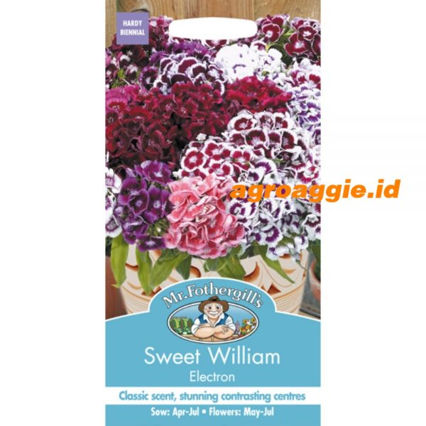 107072 Sweet William Electron