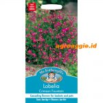 107111 Lobelia Crimson Fountain