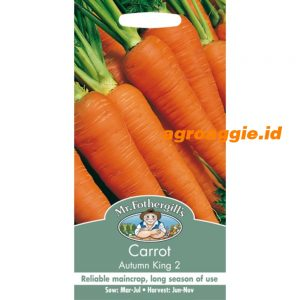 107616 Carrot Autumn King 2