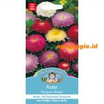 108541 Aster pompon mixed
