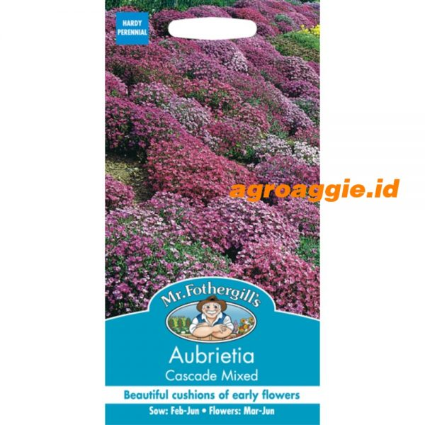 109425 Aubretia Cascade Mixed