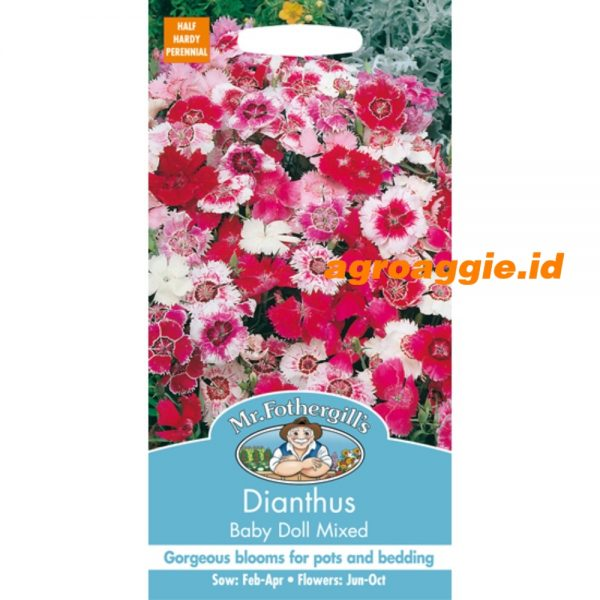 109503 Dianthus Baby Doll Mixed