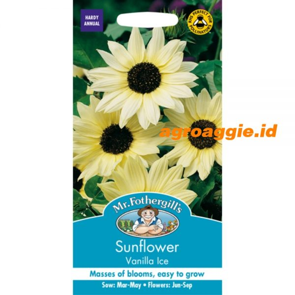 109728 Sunflower Vanilla Ice