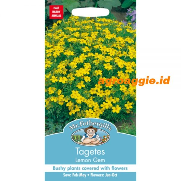109853 Tagetes Lemon Gem