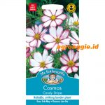 109926 Cosmos Candy Stripe